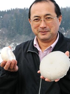 mushroom303